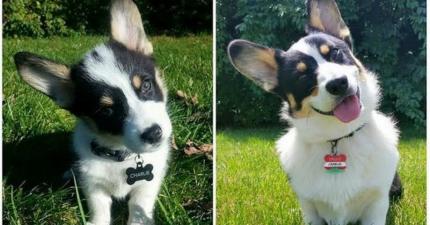 16張狗狗「小時候 vs. 長大」的超萌對比圖,讓你看到唯一不變的是他們對你的愛!