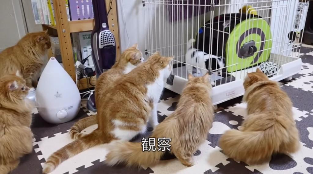 主人帶了一隻小狗狗回家,於是家裡6隻貓咪便開始「面試新人」...