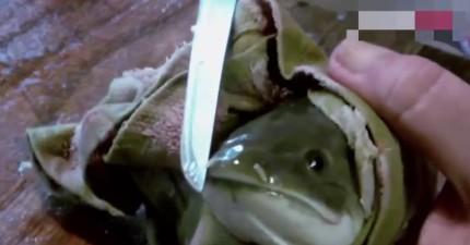 她做菜做到一半突然發現,這顆「半小時前切下的魚頭」居然還在找機會逃命?!