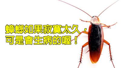 10個關於你最怕的昆蟲-蟑螂的超有趣知識。千萬不要讓蟑螂去外太空啊!