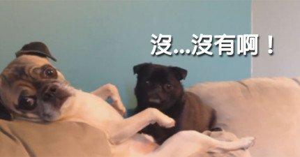 兩隻狗狗在幹不可告人的事時被抓到,這就是他們的表情。