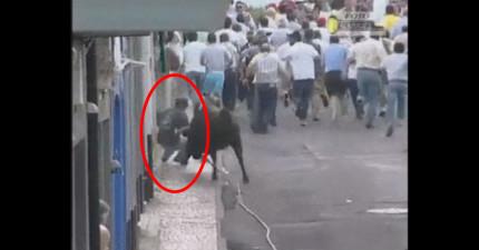眼看這名男子就要被公牛給插死,他急智裝死,結果牛看到後...