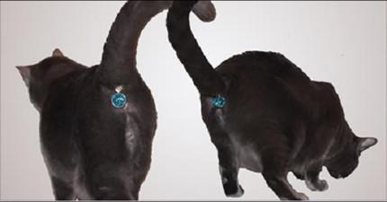 這個貓咪寶石會把每隻「貓咪屁股變成最閃亮的寶藏」。
