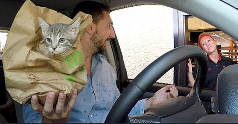 得來速工作人員明明就給了客人一個麥香雞堡,但一回頭紙袋裡出現了一隻...小貓咪!