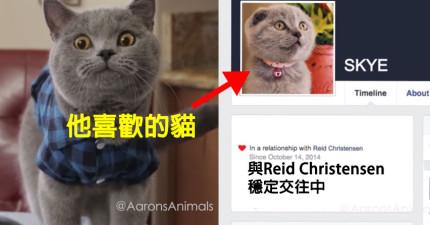 當這隻貓咪發現到戀情還沒有開始就已經結束時,他的反應可能就跟你的一模一樣!