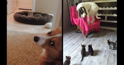 17隻一直被貓咪「眼神霸凌」的超悲情狗狗。