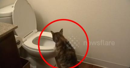 因為家中總有人上廁所不沖水讓他火大裝監視器要緝兇,但他沒想到兇手竟然是...喵嗚?