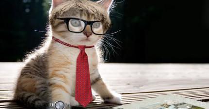 西班牙小鎮投票通過「讓貓與狗享受與人類同等的權利」,讓我可以開心地宣布人類終於不落後了!