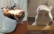 22隻光是「睡覺」就能讓你被萌到神魂顛倒的超過份貓咪。