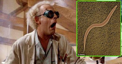 學者終於在這種線蟲體內發現了「人類長生不老的秘密」!