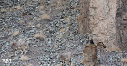 如果不能在5秒內找到照片中這隻「虎視眈眈的雪豹」,你可能下一秒就會被吃掉了!