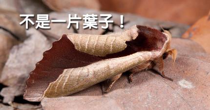 13個重要的飛蛾知識,會讓你知道他們是世界上最被低估的超級生物!