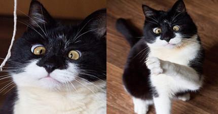 不要直視這隻鬥雞眼貓咪的雙眼,因為你可能會不知不覺地愛上他!