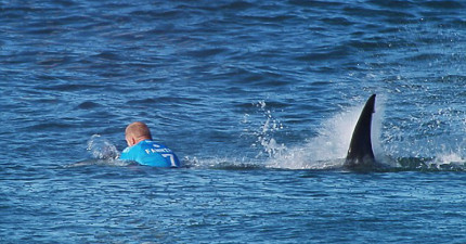 這位衝浪選手才正要迎接決賽,後頭這隻致命大鯊魚就張開血盆大口朝他襲來!