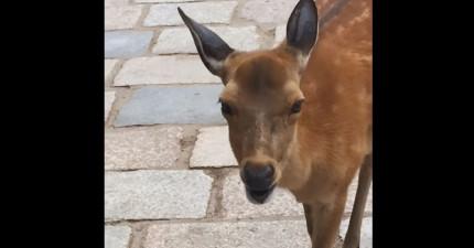我們都知道貓狗會發出什麼聲音,但你知道鹿會發出什麼聲音嗎?(超級怪)