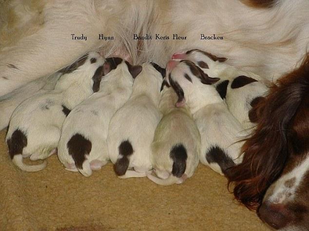 13張毛寶貝「第一張和最後一張照片」的對比圖。我已經哭到眼淚鼻涕分不清了...