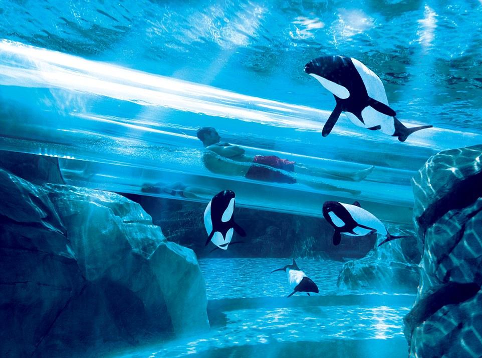 10個全球最感官爆炸的頂級滑水道,第一次知道滑水道光用眼睛看就會腳軟。