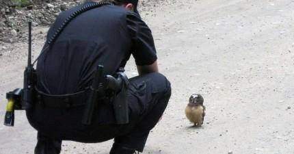 警方抓到亂闖紅燈的現行犯,但實在可愛到讓人罰單開不下去啊!