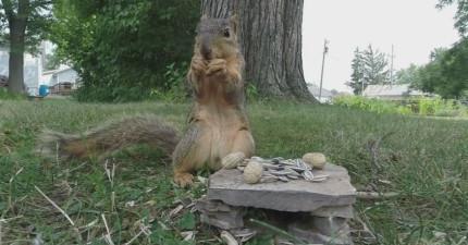 GoPro放草叢被「非禮」 他超崩潰:還人家純真可愛的小松鼠~