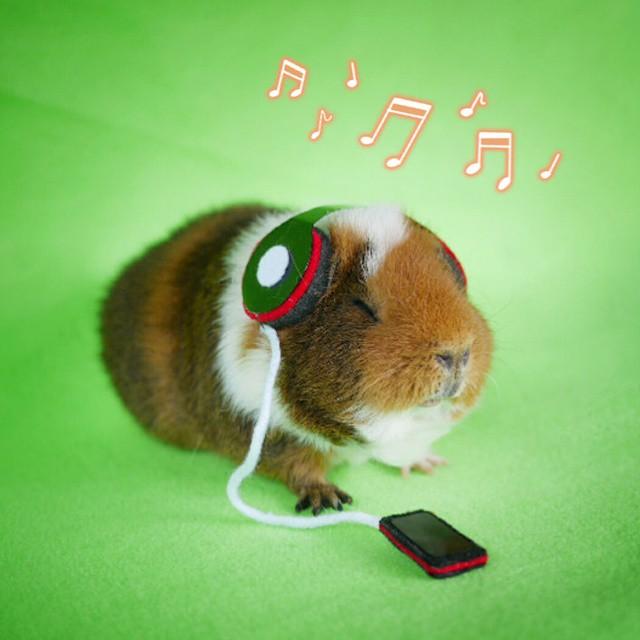 17隻會讓你相信「皮卡丘是真的」的超可愛Cosplay天竺鼠。