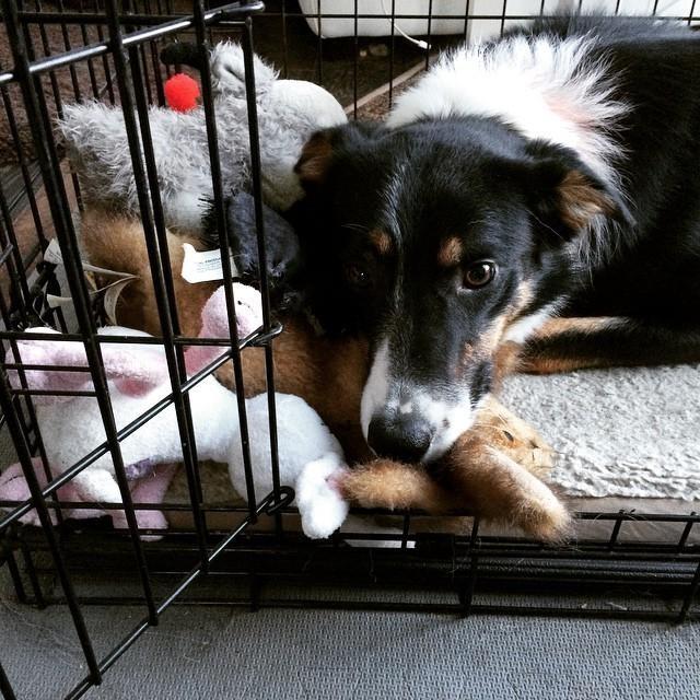 21隻因為「違法囤積」而被逮捕的壞壞貓狗。