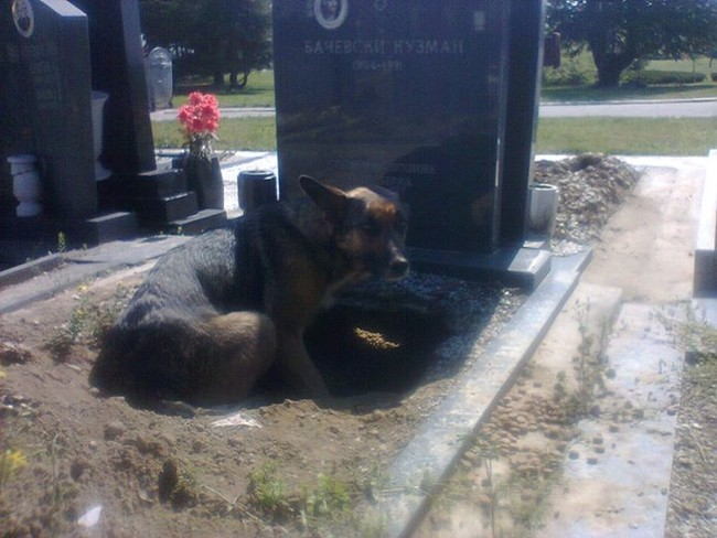 She was photographed curled up in this hole she dug at a gravesite.
