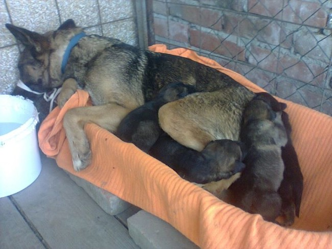 An animal rescue crew brought the mama and her babies to safety.