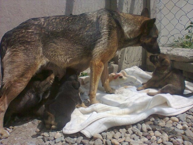 All under the ever-watchful eye of their mom, of course.