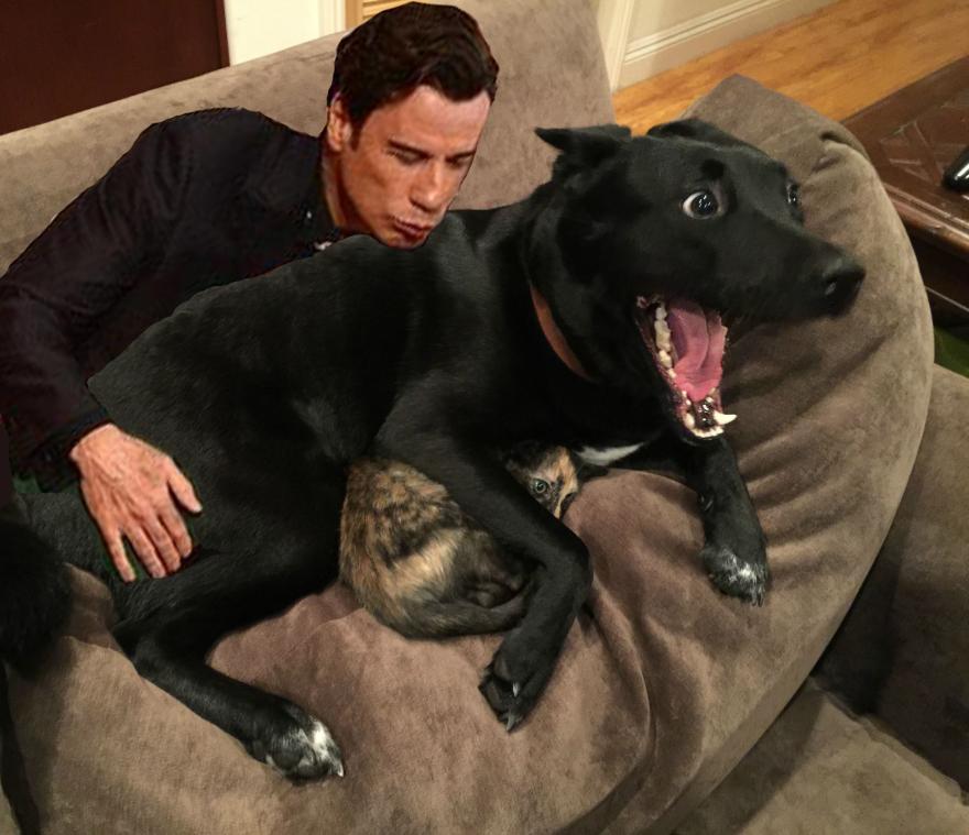 這張「狗狗保護害怕打雷的小貓」照片,又讓網友們的惡搞修圖慾望爆炸了!
