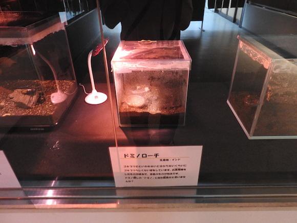 日本舉辦「蟑螂季」讓你近距離與蟑螂接觸培養感情,看來我們真的誤會了小強!