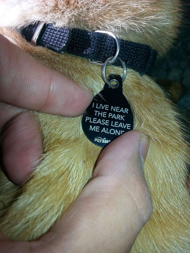 16個可能一看到就會讓你不小心笑出來的超爆笑寵物吊牌。
