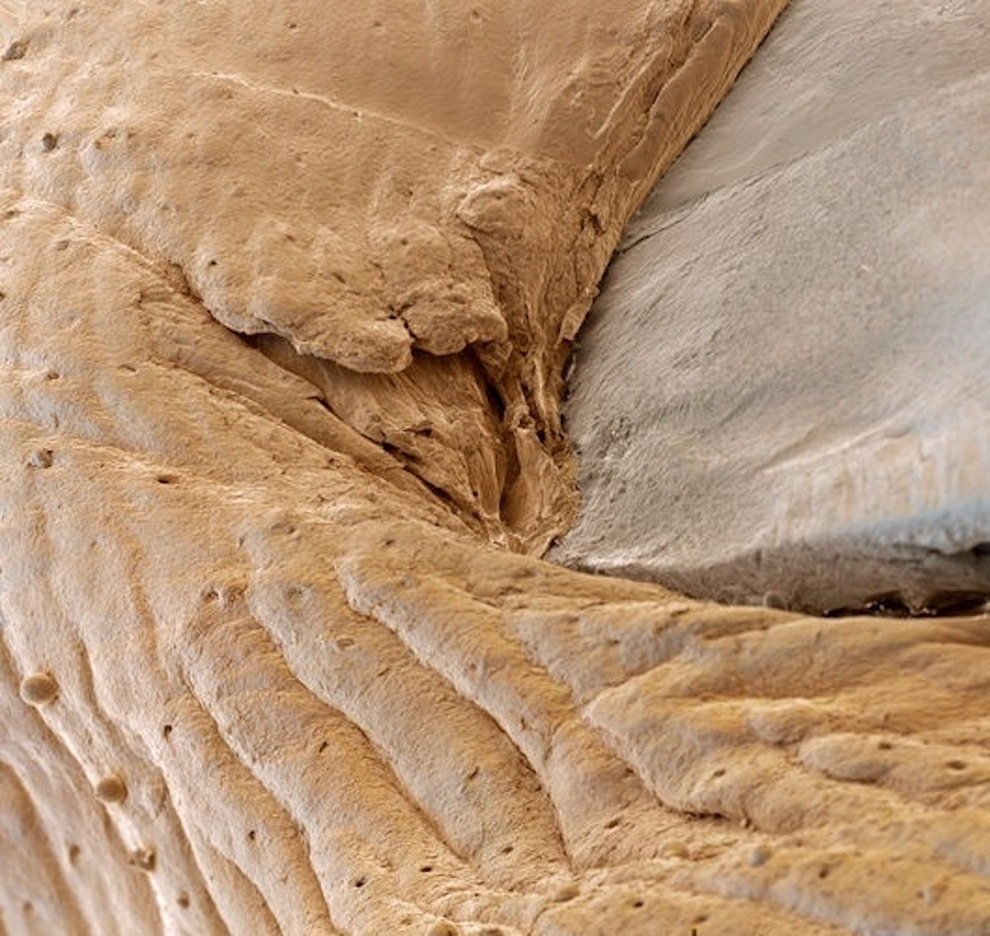 The landscape of a magnified human finger nail.