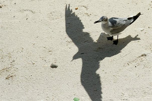 It's the spirit bird that lives inside him.