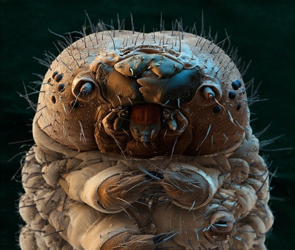 A caterpillar looks much less cute under a microscope.