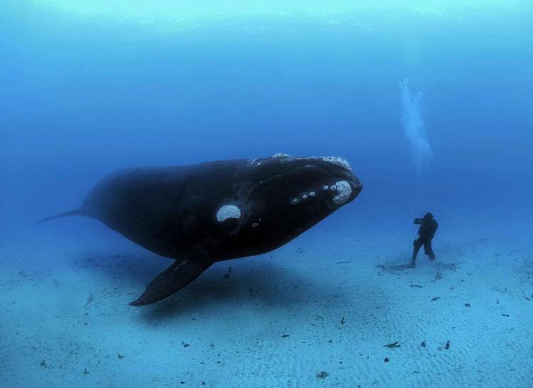20個會讓你嚇到尿濕褲子的可怕海底畫面,你準備好了嗎?