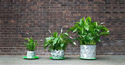 這個會隨著你的植物一起成長的「神奇變形盆栽」,就是所有植物說不出口但都超想要的歸宿!