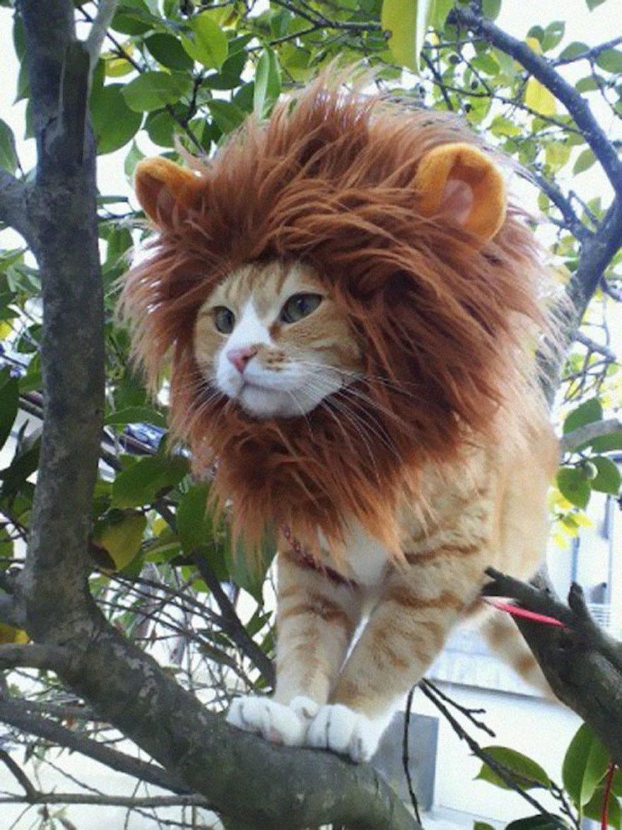20張照片證明貓咪其實比人類還會「角色扮演」!