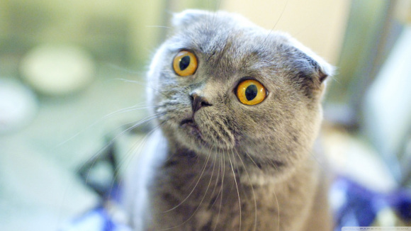 這隻貓媽媽在餵奶時露出的「無奈」表情已經說出了全世界所有媽媽的心聲。