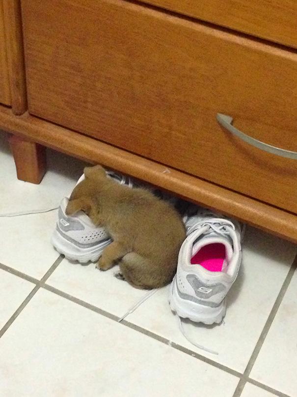 22隻睡覺舒服到絕對不會落枕的「 睡得超舒服拜託不要吵我」狗寶。