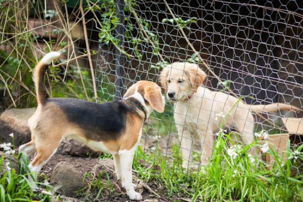 21張老狗狗遇見家中新成員寶寶的超級溫馨照。