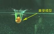 每次大號時水花都會濺起?!科學家家要教你怎麼做才能不被便便水給弄髒!