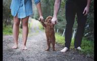 這對夫妻受夠了岳父母問他們什麼時候生小孩,於是就反擊拍了這一系列的「另類新生兒照」回應!