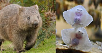 29種仗著牠們年紀小就萌遍天下無敵手的可愛小動物。