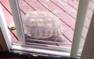 我原以為這隻烏龜被關在門外進不來,沒想到牠立刻證明烏龜比多數寵物都還聰明!