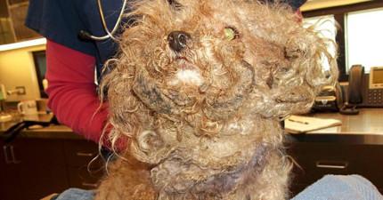 這隻流浪10年的狗狗被迫截肢又拔光牙,但他熬過苦難後露出的笑容就是你努力改變世界的動力!
