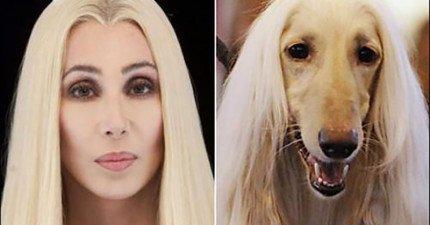 10隻幾乎跟名人是「失散多年雙胞胎」的爆笑狗狗。