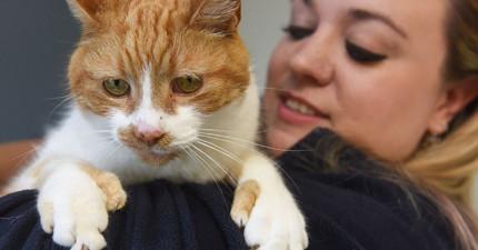 這隻流浪貓有22根指頭讓人以為是缺陷,但他卻因此有超多超酷能力咧!