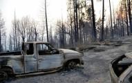 在這個森林大火把他們的家園摧毀後,大火熄滅時他們看到了不可能的奇蹟。