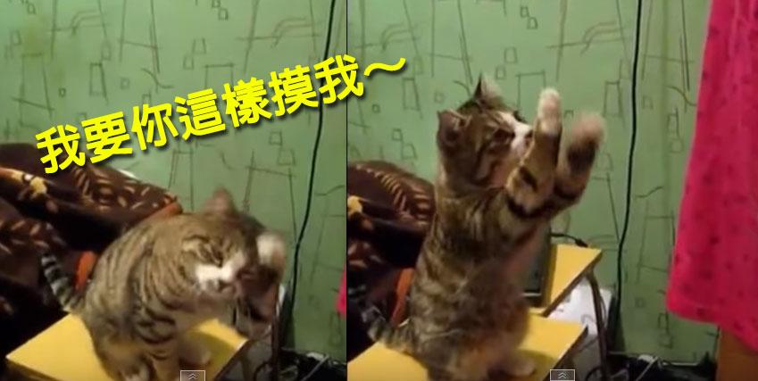 主人一直用錯誤方式摸貓咪,接著他就示範給主人看他想要的摸摸方式。