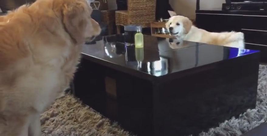這隻狗寶寶居然意外想出了超妙的方法,利用了地形之利鬥智贏了速度比他快的哥哥。